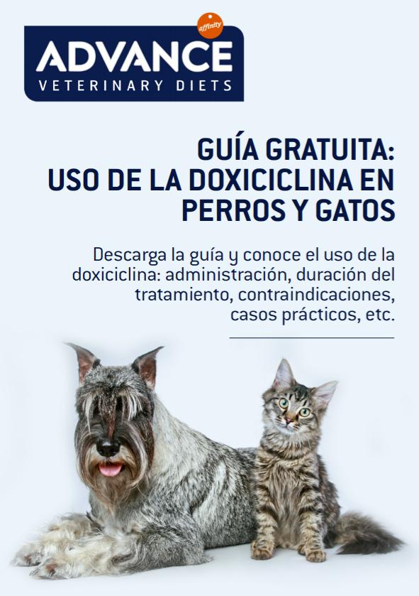 Guía Doxiciclina - Vets&Clinics.png