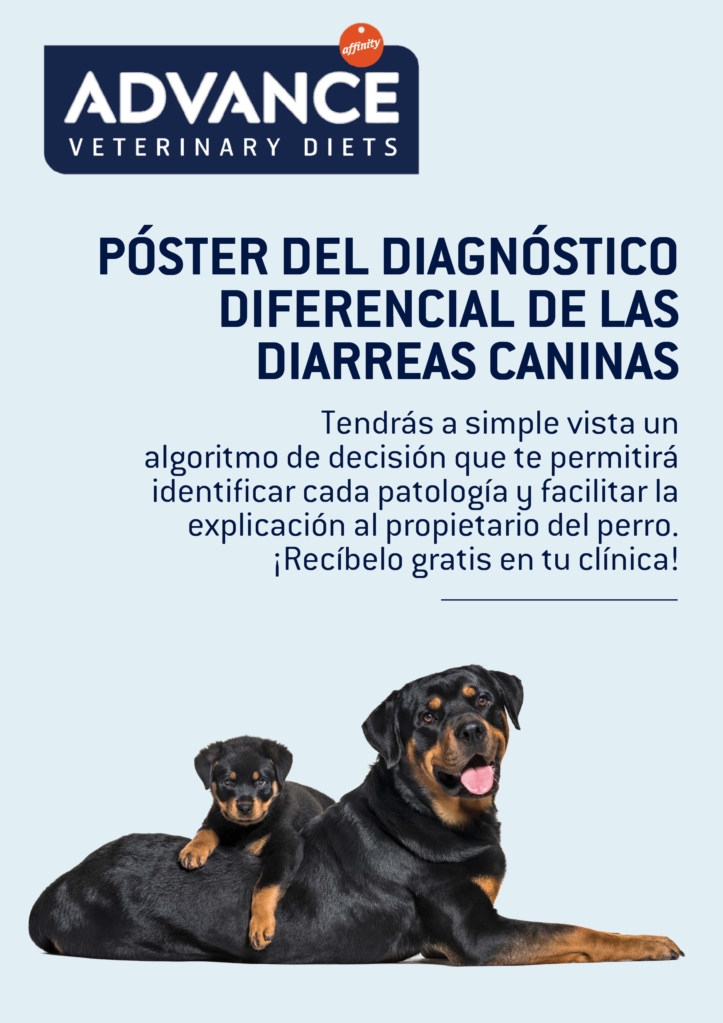 poster_df_grande.png
