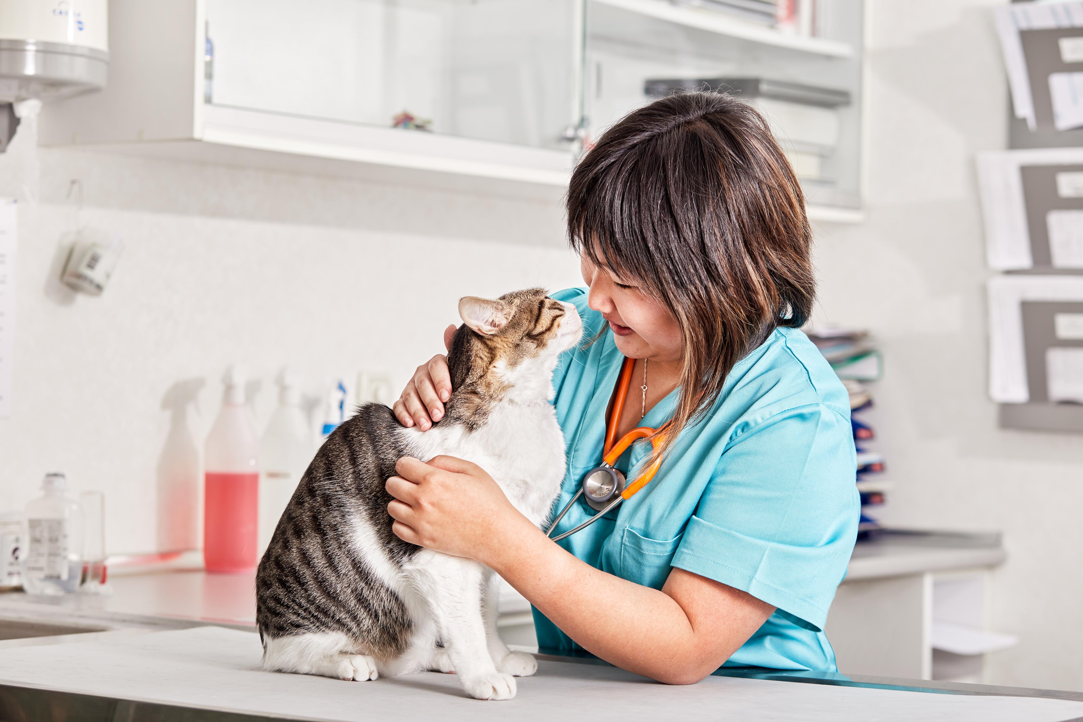 hipertiroidismo gatos