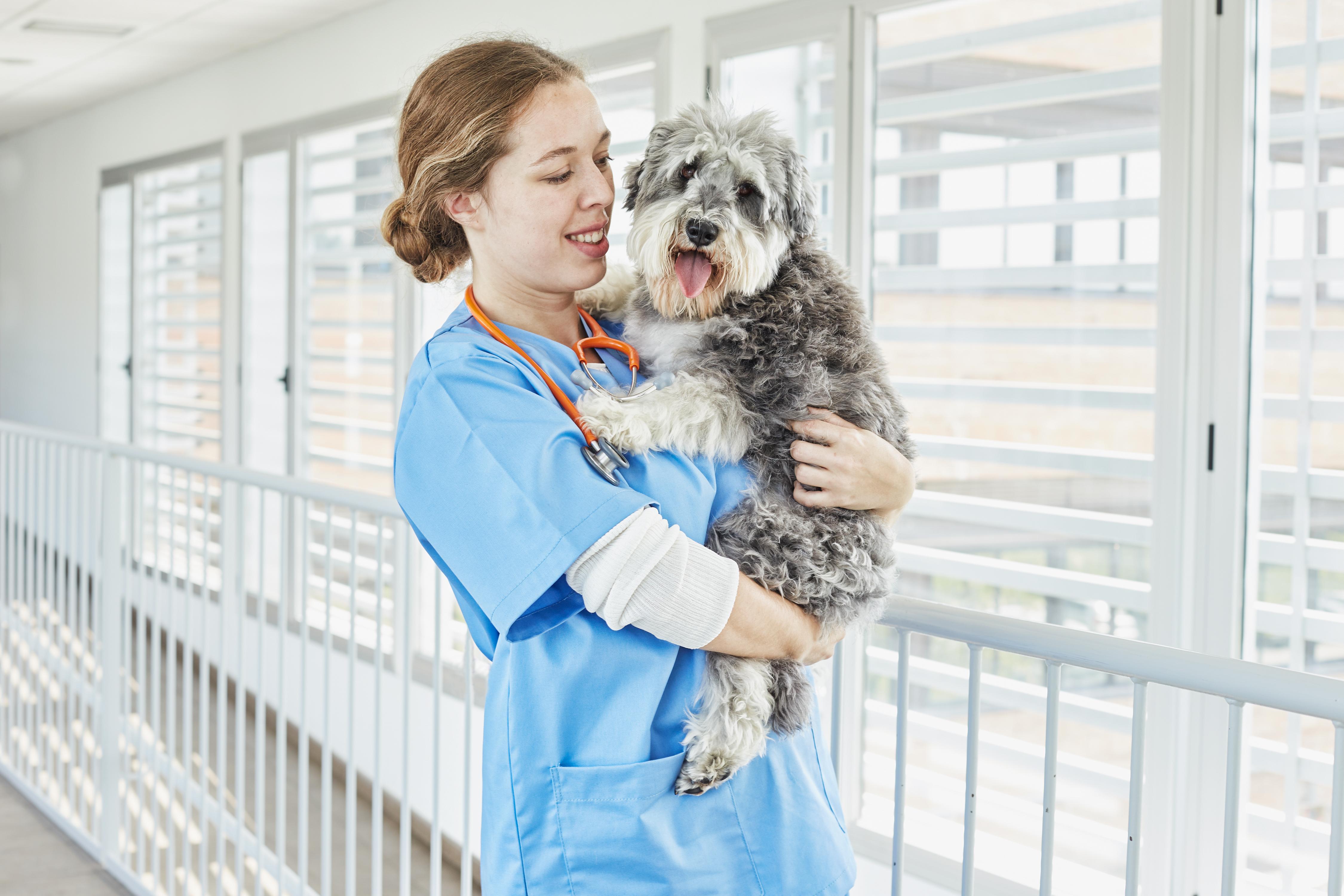 pienso para perros esterilizados