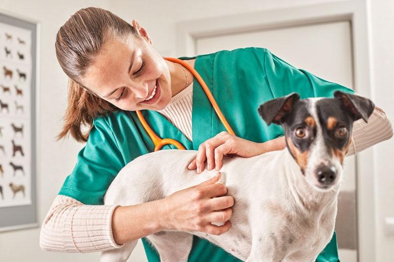 reaccion alergica en perros