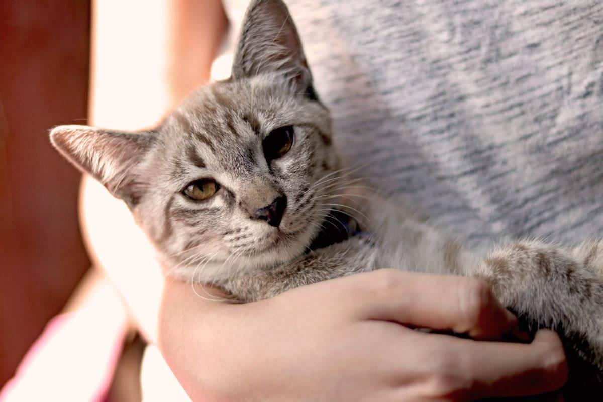 bolas de pelo gatos remedios
