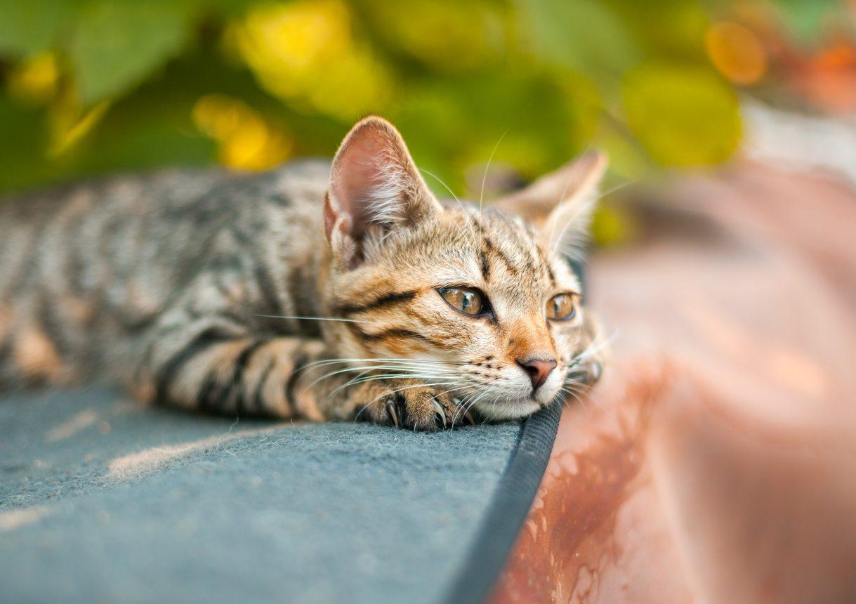 gatos com diarreia
