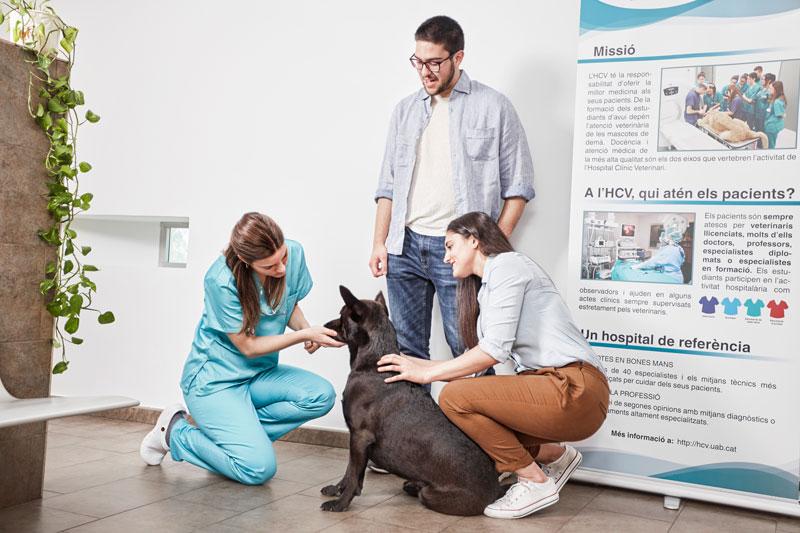 paralisia facial em cães